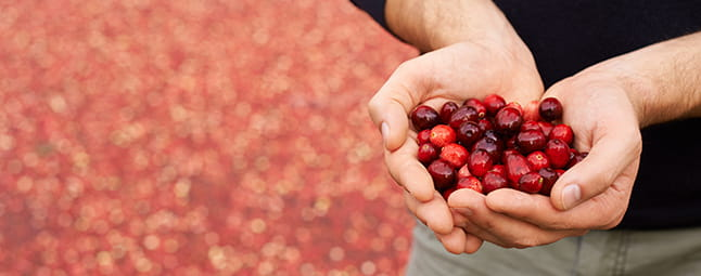 Cranberry grower finds success